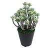 人工観葉植物 グリーンセダム ミニサイズ