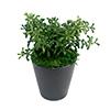 人工観葉植物 マリオ ミニサイズ