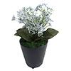人工観葉植物 ブルースキミア ミニサイズ