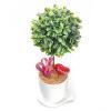 人工観葉植物 ボックスウッド Sサイズ