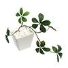 人工観葉植物 シュガーバイン WHT Sサイズ