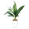 人工観葉植物 ドラセナ Mサイズ